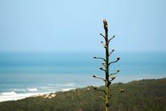 Kaktus in einem Strand Stockfotografie
