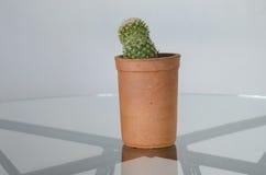 Kaktus in einem Topf Stockbilder
