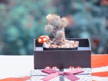 Kaktus in einer Geschenkbox auf dem Tisch Abbildung der roten Lilie Stockbilder