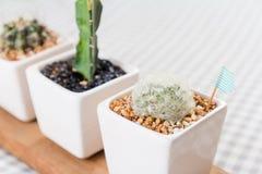 Kaktus in einer Schale Stockbilder