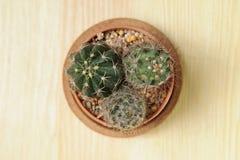 Kaktus för kortkort tre Arkivbild