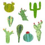 Kaktus för vektorillustrationuppsättning med blommor i plan stil Royaltyfri Fotografi