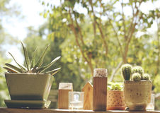 Kaktus für die Hauptverzierung Stockfotografie
