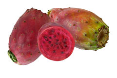 Kaktus för Prickly pear Arkivbild