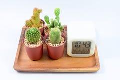Kaktus fyra olika variationer av kaktuns i krukor på trämagasinet med c Arkivbild