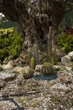 Kaktus-Garten auf den Klippen in Sorrent Italien stockfotografie