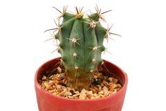 Kaktus getrennt Stockbild