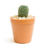 Kaktus getrennt Lizenzfreies Stockbild