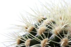 Kaktus getrennt auf Weiß Lizenzfreie Stockbilder