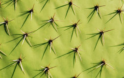 Kaktus-Hintergrund Stockfotos