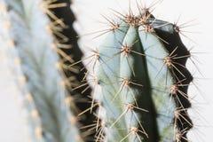 Kaktus i blomkruka på vit bakgrund Royaltyfria Foton