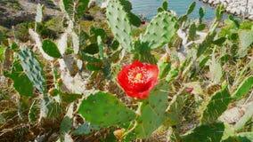 Kaktus i blomma 2 royaltyfri bild