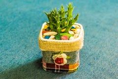 Kaktus i den lilla krukan för handgjord kruka för hem- eller kontorsgarnering Royaltyfria Foton