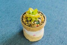 Kaktus i den lilla krukan för handgjord kruka för hem- eller kontorsgarnering Arkivfoton