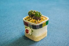 Kaktus i den lilla krukan för handgjord kruka för hem- eller kontorsgarnering Arkivbilder