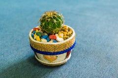 Kaktus i den lilla krukan för handgjord kruka för hem- eller kontorsgarnering Arkivfoto