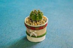 Kaktus i den lilla krukan för handgjord kruka för hem- eller kontorsgarnering Royaltyfria Bilder