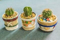 Kaktus i den lilla krukan för handgjord kruka för hem- eller kontorsgarnering Royaltyfri Fotografi