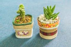Kaktus i den lilla krukan för handgjord kruka för hem- eller kontorsgarnering Royaltyfri Foto