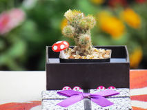 Kaktus i en gåvaask på tabellen Royaltyfri Fotografi