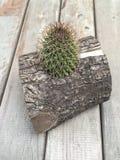 Kaktus i en journal Arkivbild