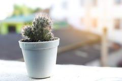 Kaktus i en kruka med mjukt ljus Royaltyfri Bild