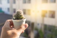Kaktus i en kruka med mjukt ljus Arkivbild