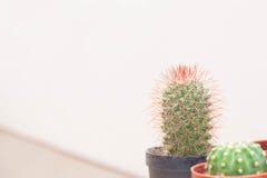 Kaktus i en liten plast- kruka Royaltyfria Bilder