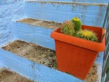 Kaktus i en växtkruka fotografering för bildbyråer