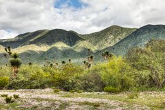 Kaktus i förgrunden av ett berg fotografering för bildbyråer