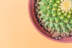 Kaktus i hörnet av bilden på orange bakgrund Royaltyfria Bilder