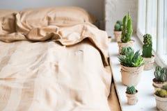 Kaktus i inre, fönster i ett sängrum arkivbilder