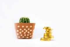 Kaktus i keramisk kruka och guld- mynt Arkivfoton