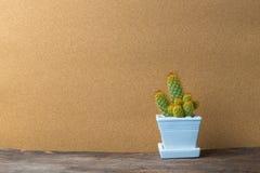 Kaktus i keramisk kruka på trätabellen med tappning Arkivbilder