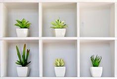 Kaktus i kruka på hyllan Fotografering för Bildbyråer