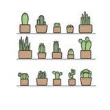 Kaktus i krukorna Arkivbild