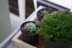 Kaktus i kwiat Zdjęcie Royalty Free
