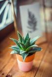 Kaktus i lerakruka Fotografering för Bildbyråer
