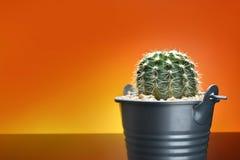 Kaktus i metallbutket och apelsinbakgrund Begrepp för kopia Royaltyfria Bilder