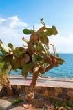 Kaktus i morze Zdjęcia Royalty Free