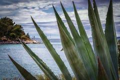 Kaktus i morze Zdjęcia Stock