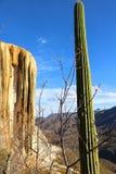 Kaktus i Osłupiała siklawa w Meksyk Zdjęcia Royalty Free