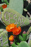 Kaktus i Parc Guell Royaltyfri Bild
