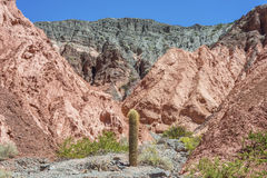 Kaktus i Purmamarca, Jujuy, Argentina. Arkivbilder