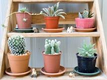 Kaktus i sukulent w garnku Zdjęcia Royalty Free