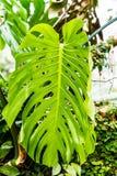 Kaktus i sukulenty Fotografia Royalty Free