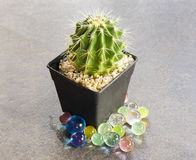 Kaktus i svart kruka Royaltyfri Bild