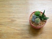 kaktus i tłustoszowata roślina w brown garnek stawiającym dalej drewnianym powierzchnia stole troszkę Obrazy Stock