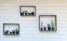 Kaktus i tłustoszowaty stawiający na półce Zdjęcia Stock