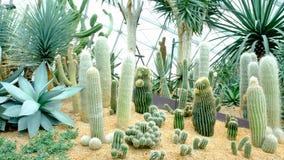 Kaktus i trädgården Royaltyfri Bild